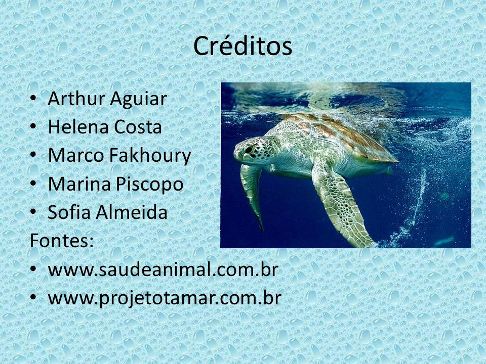 Créditos Arthur Aguiar Helena Costa Marco Fakhoury Marina Piscopo Sofia Almeida Fontes: www.saudeanimal.com.br www.projetotamar.com.br