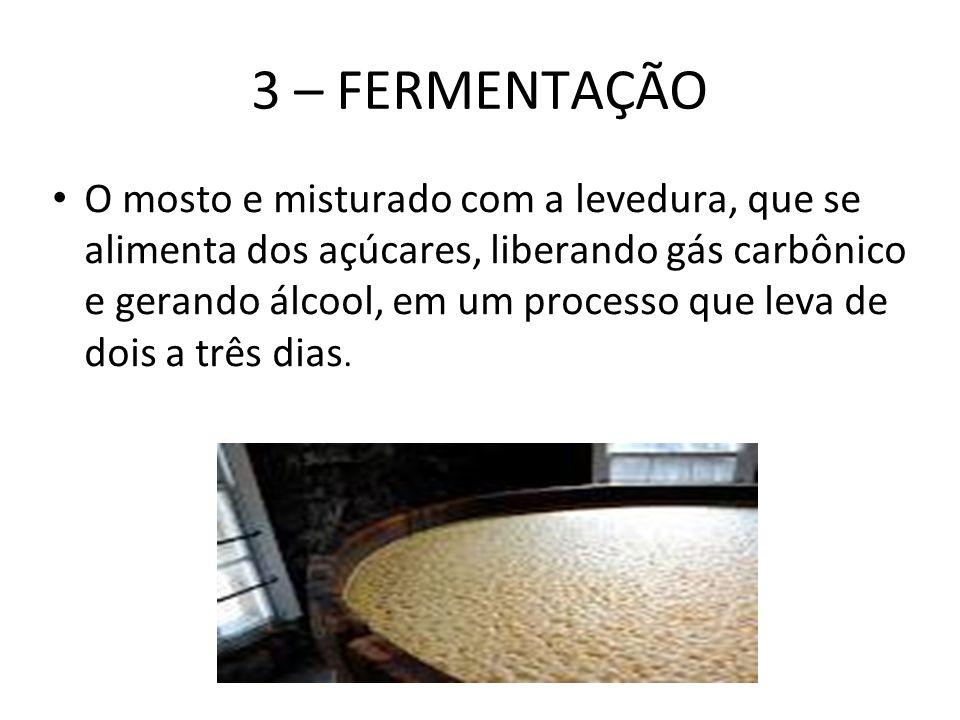 3 – FERMENTAÇÃO O mosto e misturado com a levedura, que se alimenta dos açúcares, liberando gás carbônico e gerando álcool, em um processo que leva de