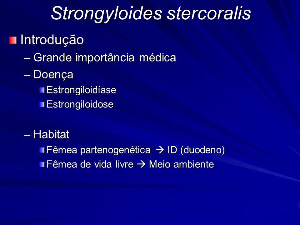 Strongyloides stercoralis Destino da larva filarióide infectante (L3) Penetração ativa na pele ou mucosa (10 cm/h) Algumas morrem no trajeto Alcance de vasos sanguíneos e linfáticos  coração  pulmões (capilares  L4) Atravessa alvéolo  árvore brônquica  faringe Eliminada pela expectoração Ingerida por deglutição Estômago  ID  Fêmea partenogenética  Ovos larvados