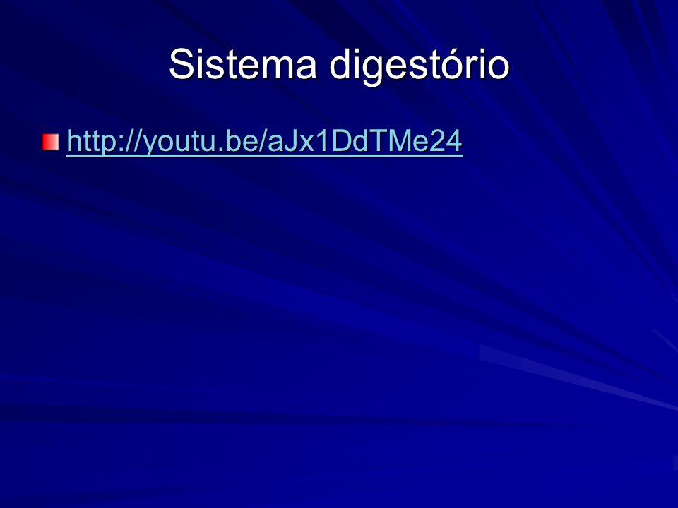 Strongyloides stercoralis Morfologia: –Formas adultas fêmeas: Fêmea partenogenética (3n) –Corpo cilíndrico, filiforme longo, extremidade anterior arredondada e posterior afilada –1,7 a 2,5 mm comprimento x 0,03 a 0,04 mm de largura –Fêmea ovovivípara (30 a 40 ovos/dia) –Não apresenta receptáculo seminal Fêmea de vida livre (2n) –Corpo fusiforme, extremidade anterior arredondada e posterior afilada –0,8 a 1,2 mm comprimento x 0,05 a 0,07 mm largura –Apresenta receptáculo seminal