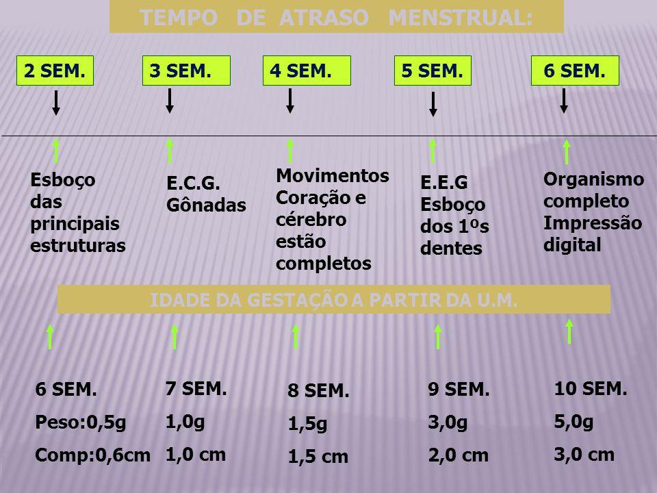 TEMPO DE ATRASO MENSTRUAL: 2 SEM.3 SEM.4 SEM.5 SEM.