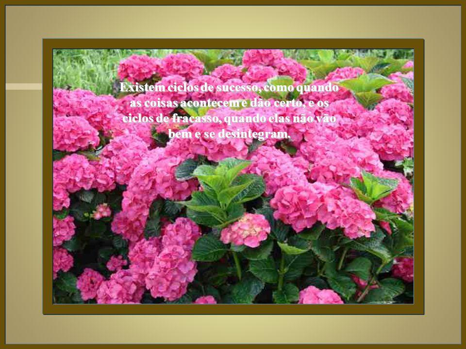 Não oferecer resistência à vida é estar em estado de graça, de descanso e de luz.