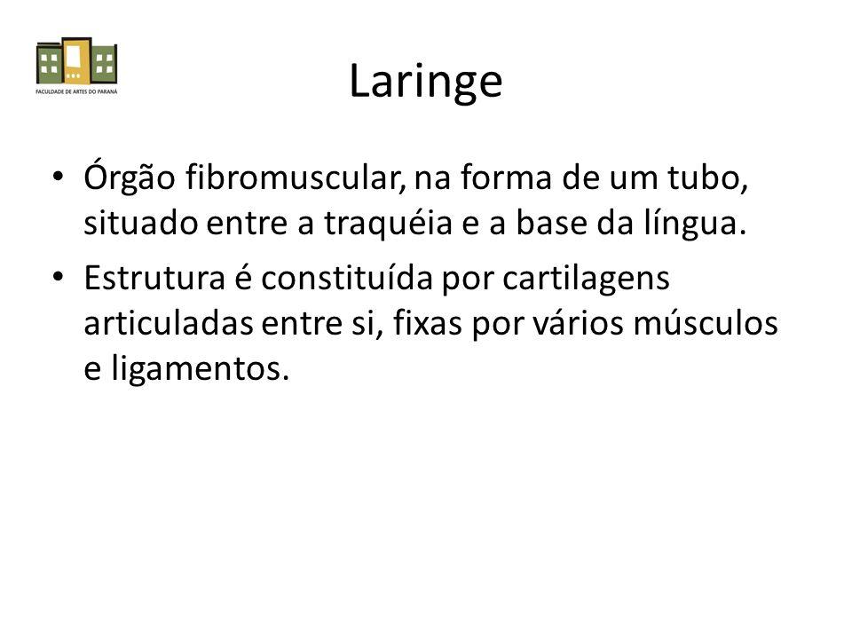 Laringe Órgão fibromuscular, na forma de um tubo, situado entre a traquéia e a base da língua. Estrutura é constituída por cartilagens articuladas ent