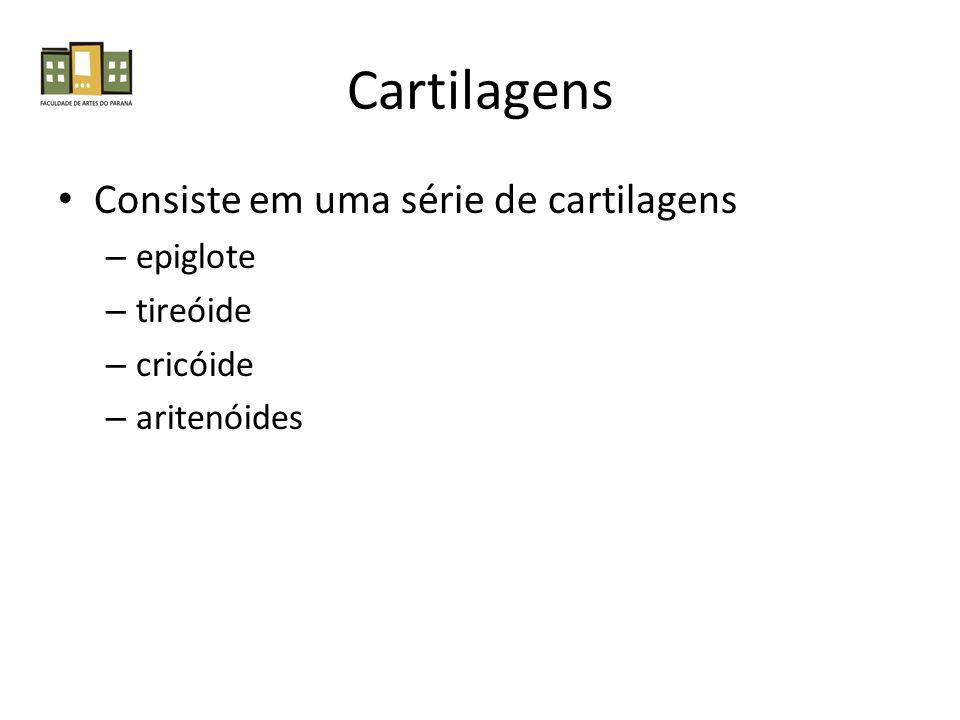 Cartilagens Consiste em uma série de cartilagens – epiglote – tireóide – cricóide – aritenóides