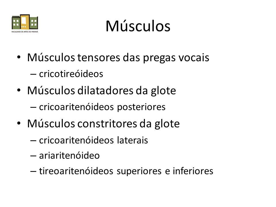 Músculos Músculos tensores das pregas vocais – cricotireóideos Músculos dilatadores da glote – cricoaritenóideos posteriores Músculos constritores da