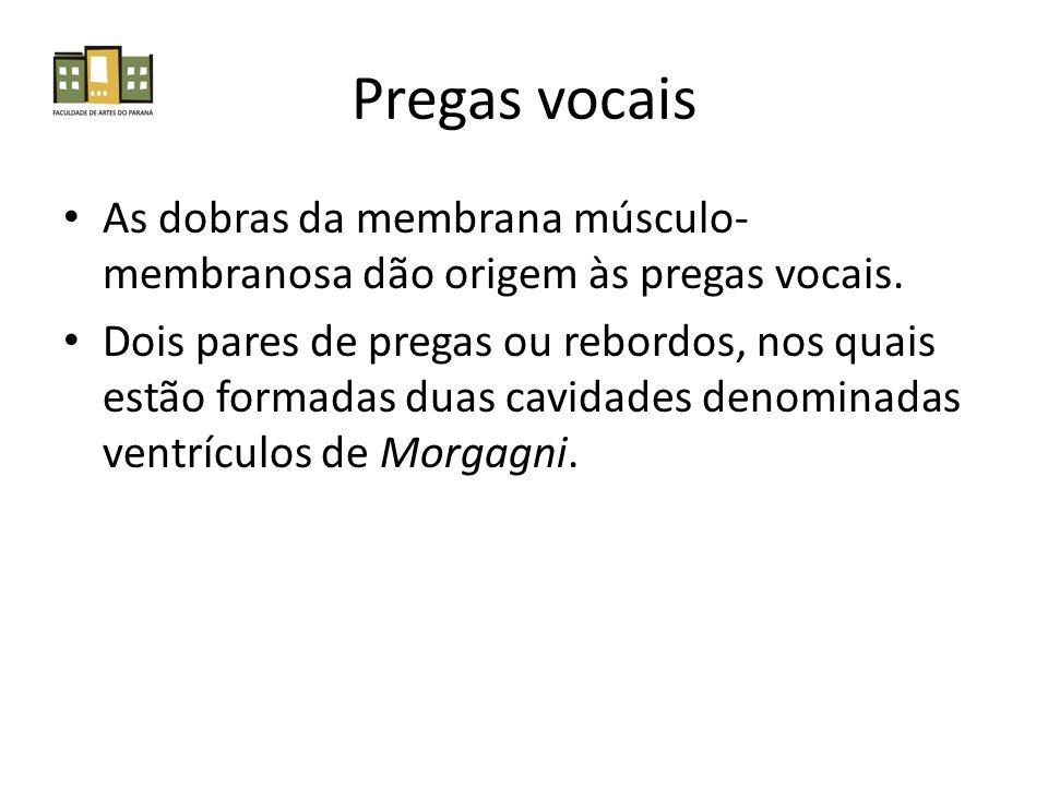 Pregas vocais As dobras da membrana músculo- membranosa dão origem às pregas vocais. Dois pares de pregas ou rebordos, nos quais estão formadas duas c