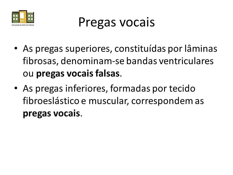 Pregas vocais As pregas superiores, constituídas por lâminas fibrosas, denominam-se bandas ventriculares ou pregas vocais falsas. As pregas inferiores