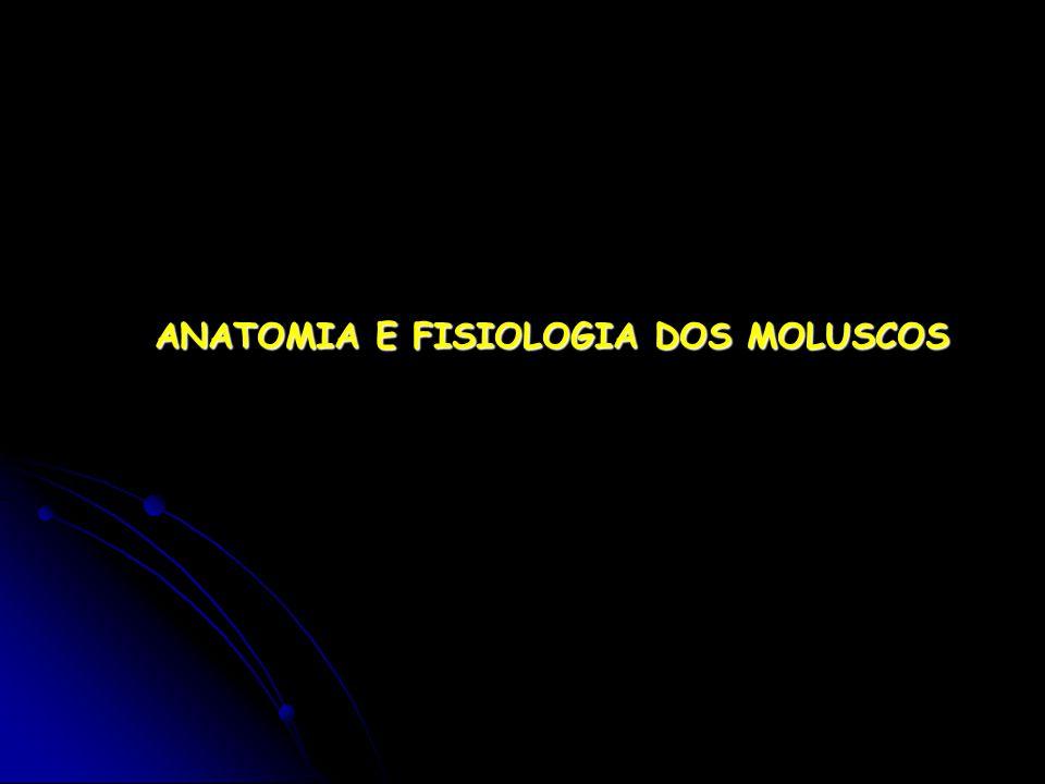 ANATOMIA E FISIOLOGIA DOS MOLUSCOS