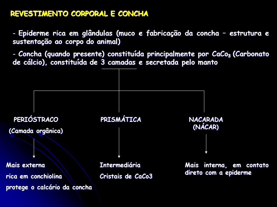 REVESTIMENTO CORPORAL E CONCHA - Epiderme rica em glândulas (muco e fabricação da concha – estrutura e sustentação ao corpo do animal) - Concha (quando presente) constituída principalmente por CaCo 3 (Carbonato de cálcio), constituída de 3 camadas e secretada pelo manto PERIÓSTRACO (Camada orgânica) Mais externa rica em conchiolina protege o calcário da concha PRISMÁTICA Intermediária Cristais de CaCo3 NACARADA (NÁCAR) Mais interna, em contato direto com a epiderme