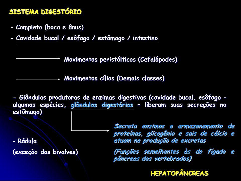 SISTEMA DIGESTÓRIO - Completo (boca e ânus) - Cavidade bucal / esôfago / estômago / intestino Movimentos cílios (Demais classes) Movimentos peristálticos (Cefalópodes) - Glândulas produtoras de enzimas digestivas (cavidade bucal, esôfago – algumas espécies, glândulas digestórias – liberam suas secreções no estômago) Secreta enzimas e armazenamento de proteínas, glicogênio e sais de cálcio e atuam na produção de excretas (Funções semelhantes às do fígado e pâncreas dos vertebrados) HEPATOPÂNCREAS - Rádula (exceção dos bivalves)