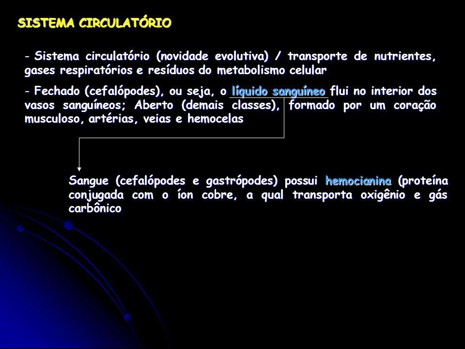 SISTEMA CIRCULATÓRIO - Sistema circulatório (novidade evolutiva) / transporte de nutrientes, gases respiratórios e resíduos do metabolismo celular - Fechado (cefalópodes), ou seja, o líquido sanguíneo flui no interior dos vasos sanguíneos; Aberto (demais classes), formado por um coração musculoso, artérias, veias e hemocelas Sangue (cefalópodes e gastrópodes) possui hemocianina (proteína conjugada com o íon cobre, a qual transporta oxigênio e gás carbônico