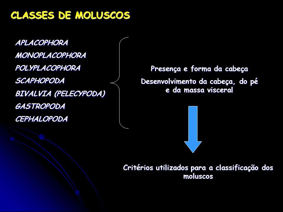 CLASSES DE MOLUSCOS APLACOPHORA MONOPLACOPHORA POLYPLACOPHORA SCAPHOPODA BIVALVIA (PELECYPODA) GASTROPODA CEPHALOPODA Presença e forma da cabeça Desenvolvimento da cabeça, do pé e da massa visceral Critérios utilizados para a classificação dos moluscos