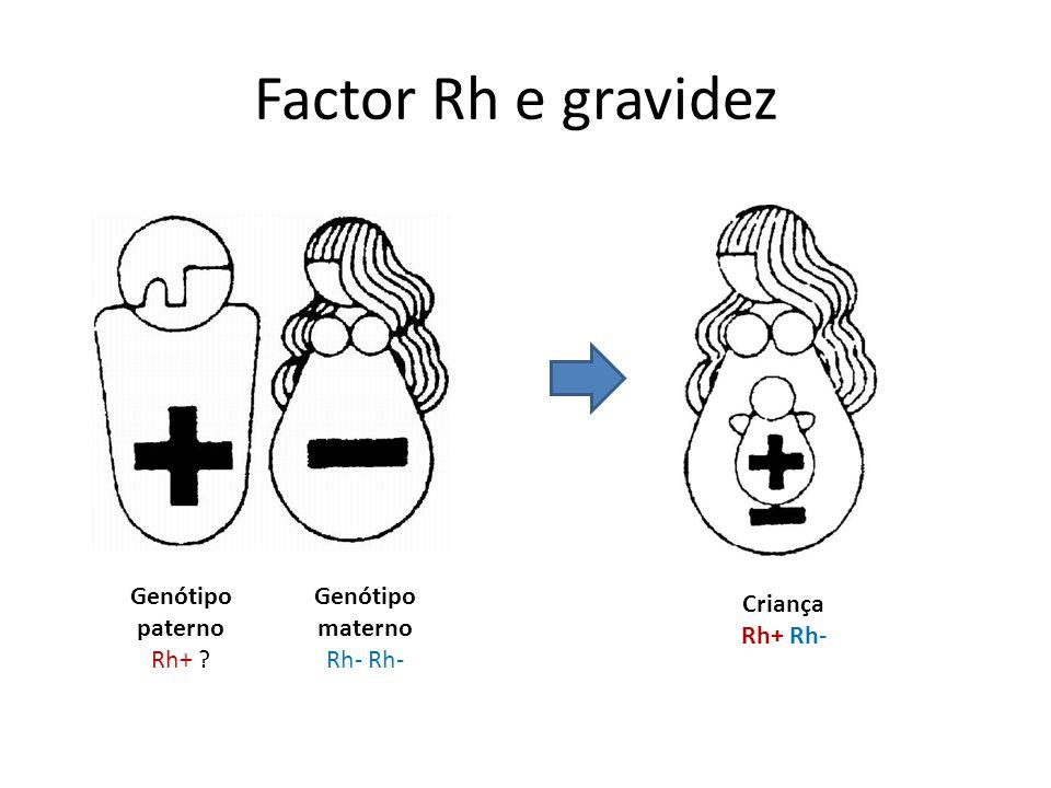 Factor Rh e gravidez Genótipo materno Rh- Genótipo paterno Rh+ ? Criança Rh+ Rh-
