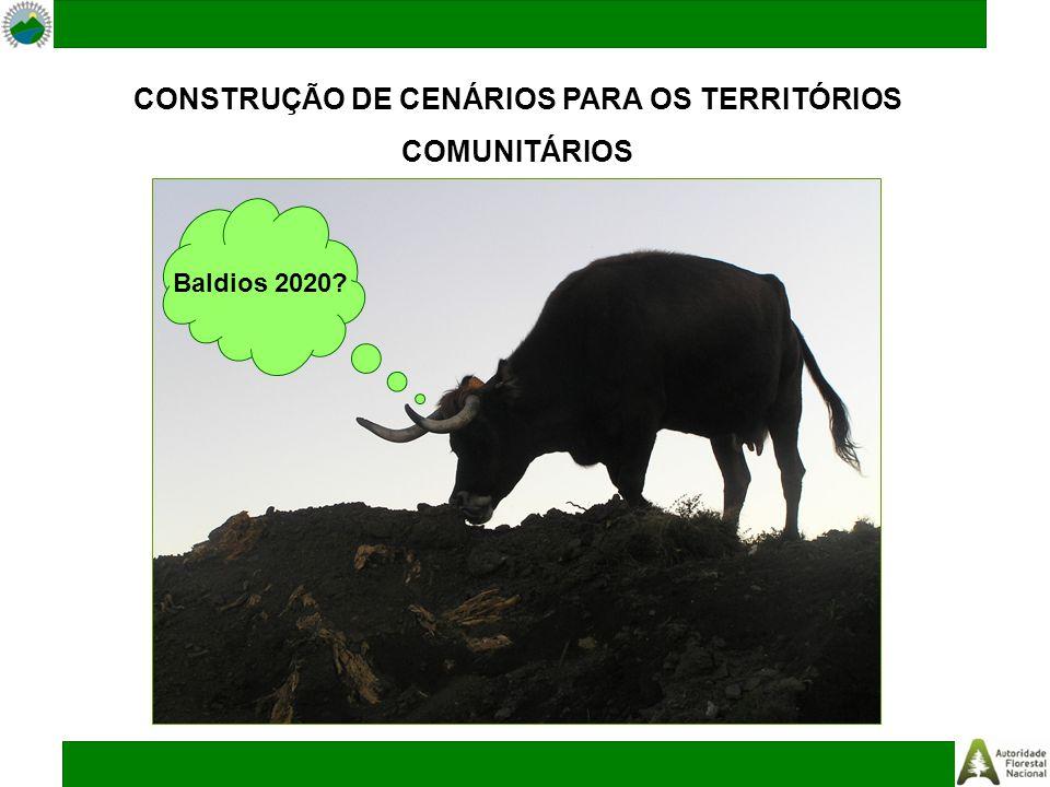 CONSTRUÇÃO DE CENÁRIOS PARA OS TERRITÓRIOS COMUNITÁRIOS Baldios 2020?