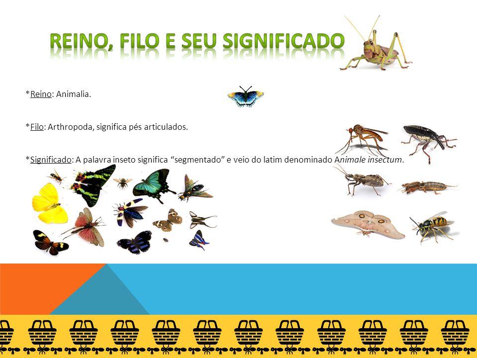 """*Reino: Animalia. *Filo: Arthropoda, significa pés articulados. *Significado: A palavra inseto significa """"segmentado"""" e veio do latim denominado Anima"""