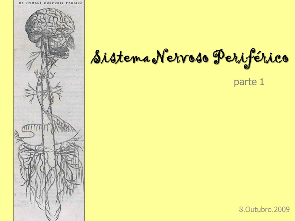 Sistema Nervoso Periférico Sistema Nervoso Periférico parte 1 8.Outubro.2009