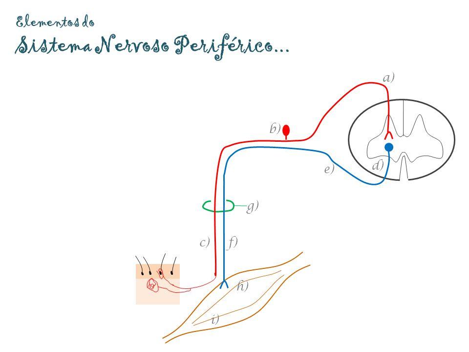 Elementos do Sistema Nervoso Periférico... g) a) b) c) d) e) f) h) i)