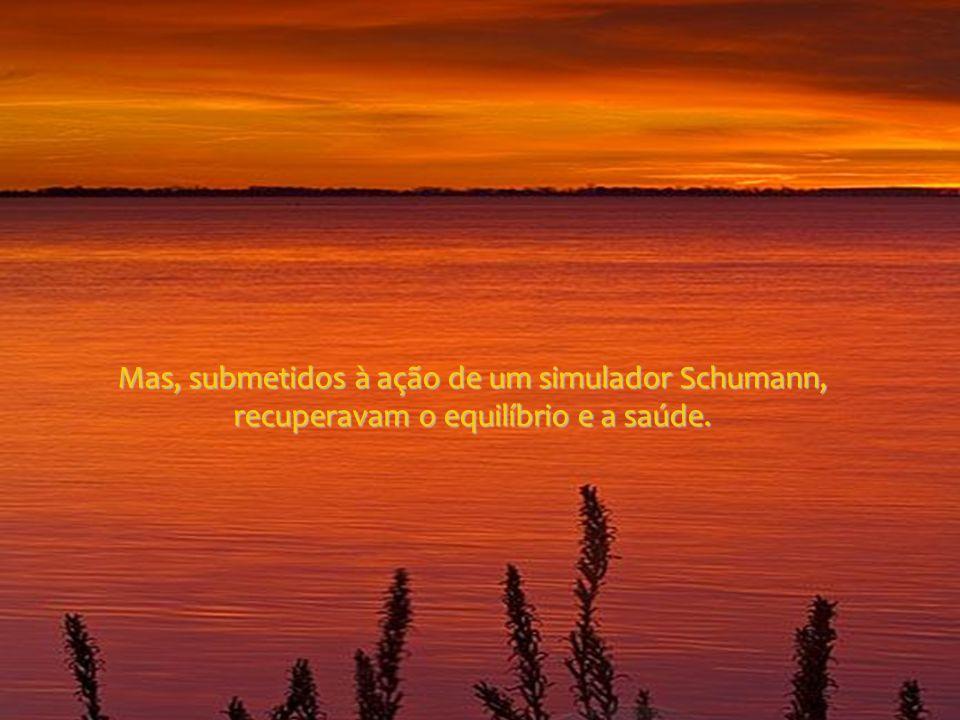 Mas, submetidos à ação de um simulador Schumann, recuperavam o equilíbrio e a saúde.