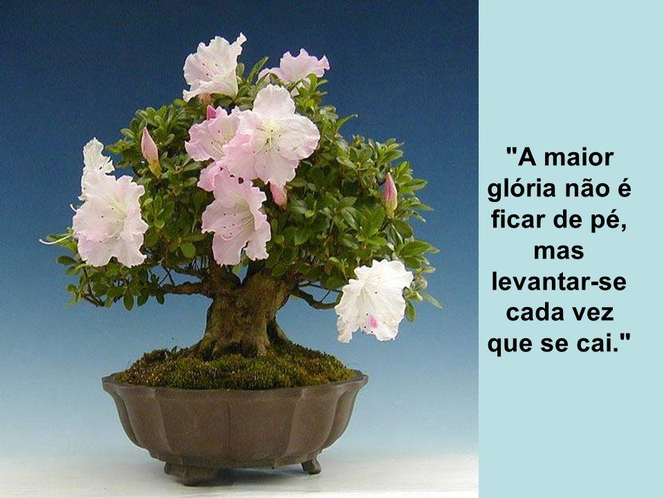 A maior glória não é ficar de pé, mas levantar-se cada vez que se cai.