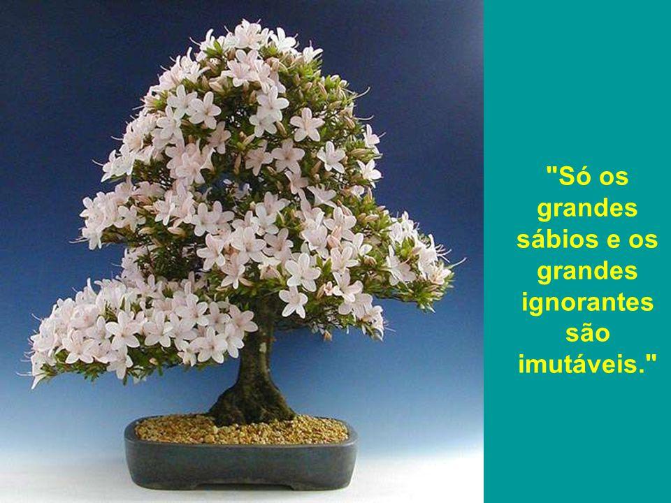 Só os grandes sábios e os grandes ignorantes são imutáveis.