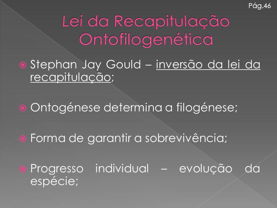  Stephan Jay Gould – inversão da lei da recapitulação;  Ontogénese determina a filogénese;  Forma de garantir a sobrevivência;  Progresso individu
