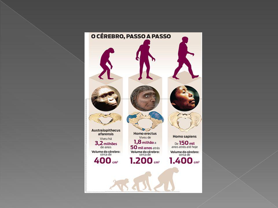 Seres Humanos Seres Estrutura Biológica PrevisíveisOrgânicos Humanos ComportamentosLivresApreendidosÚnicos Programa Aberto Pág.48