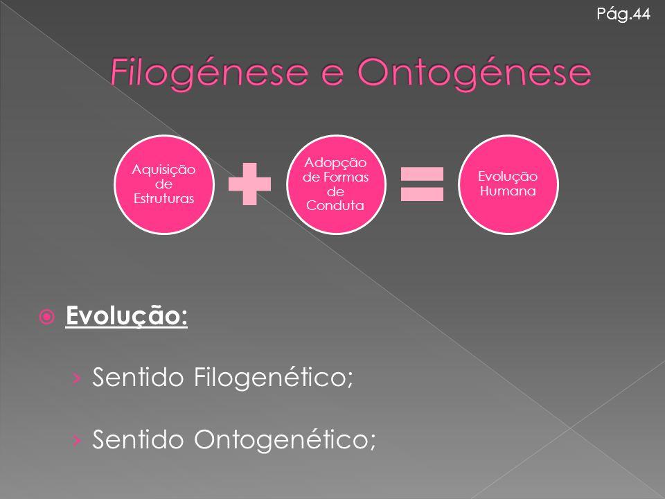  Evolução: › Sentido Filogenético; › Sentido Ontogenético; Aquisição de Estruturas Adopção de Formas de Conduta Evolução Humana Pág.44