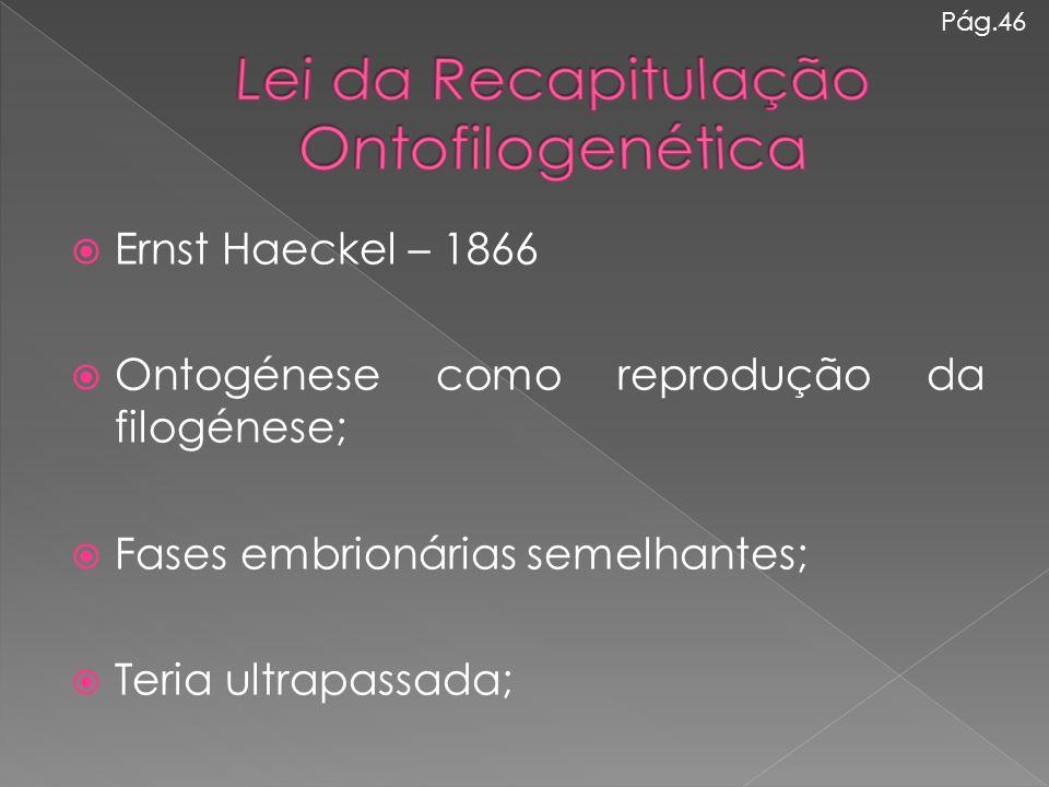  Ernst Haeckel – 1866  Ontogénese como reprodução da filogénese;  Fases embrionárias semelhantes;  Teria ultrapassada; Pág.46