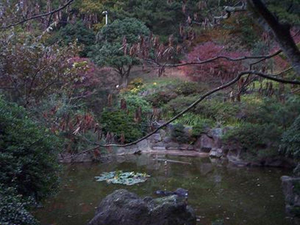 Hallim Park arboretum