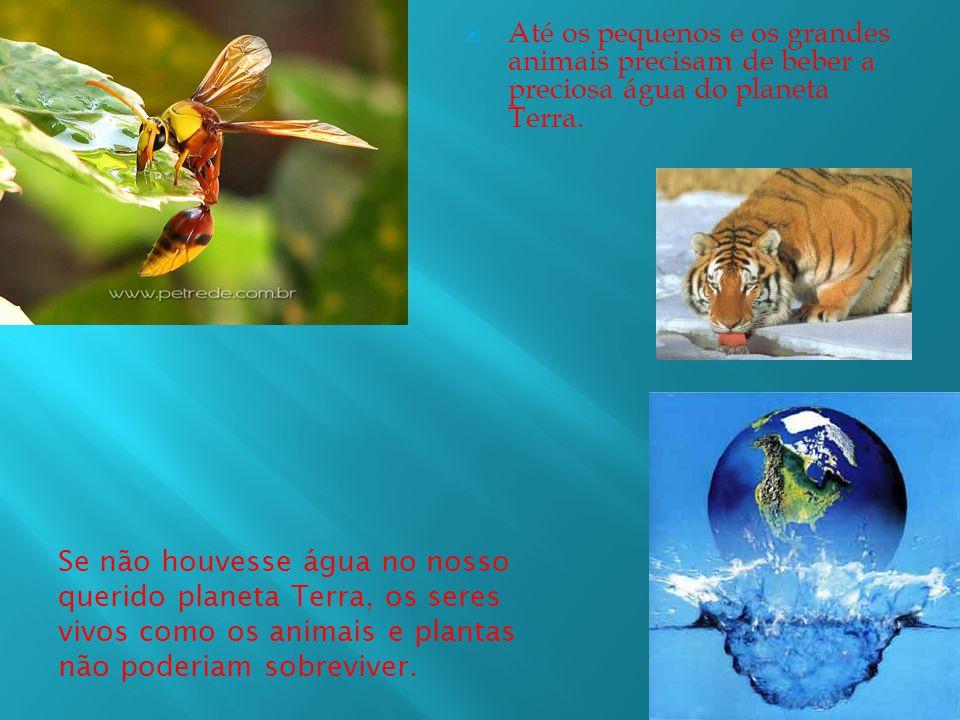 Se não houvesse água no nosso querido planeta Terra, os seres vivos como os animais e plantas não poderiam sobreviver.