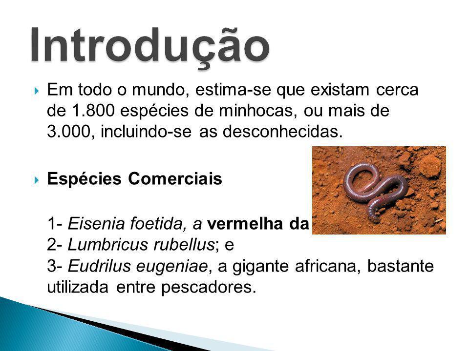  Em todo o mundo, estima-se que existam cerca de 1.800 espécies de minhocas, ou mais de 3.000, incluindo-se as desconhecidas.  Espécies Comerciais 1