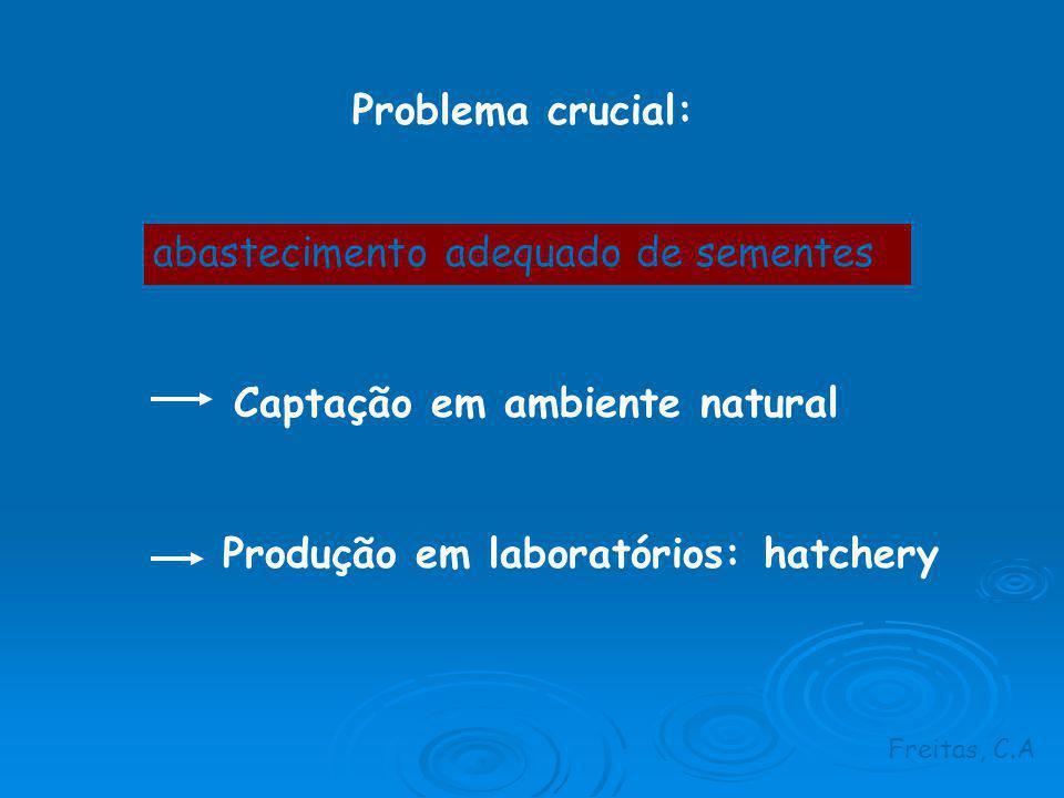 Problema crucial: abastecimento adequado de sementes Captação em ambiente natural Produção em laboratórios: hatchery Freitas, C.A