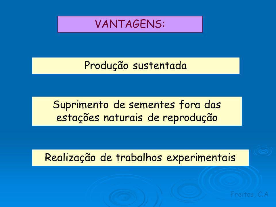 VANTAGENS: Produção sustentada Suprimento de sementes fora das estações naturais de reprodução Realização de trabalhos experimentais Freitas, C.A