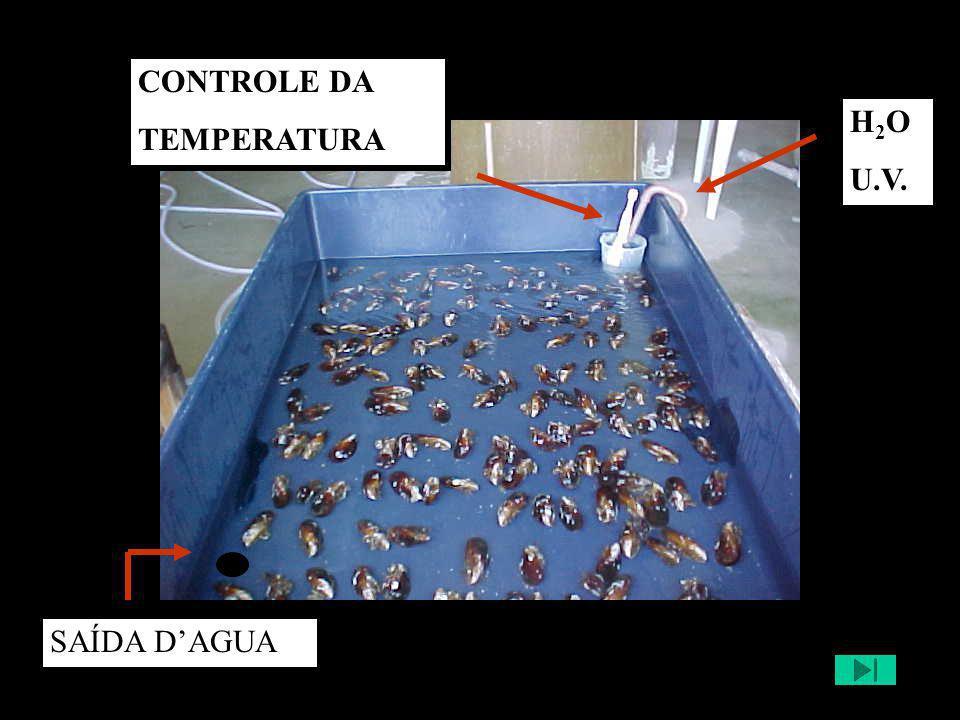 H 2 O U.V. CONTROLE DA TEMPERATURA SAÍDA D'AGUA