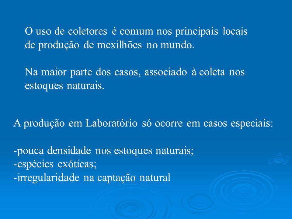 O uso de coletores é comum nos principais locais de produção de mexilhões no mundo. Na maior parte dos casos, associado à coleta nos estoques naturais