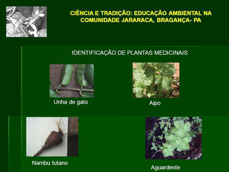 IDENTIFICAÇÃO DE PLANTAS MEDICINAIS Unha de gato Aipo Aguardente Nambu tutano CIÊNCIA E TRADIÇÃO: EDUCAÇÃO AMBIENTAL NA COMUNIDADE JARARACA, BRAGANÇA-