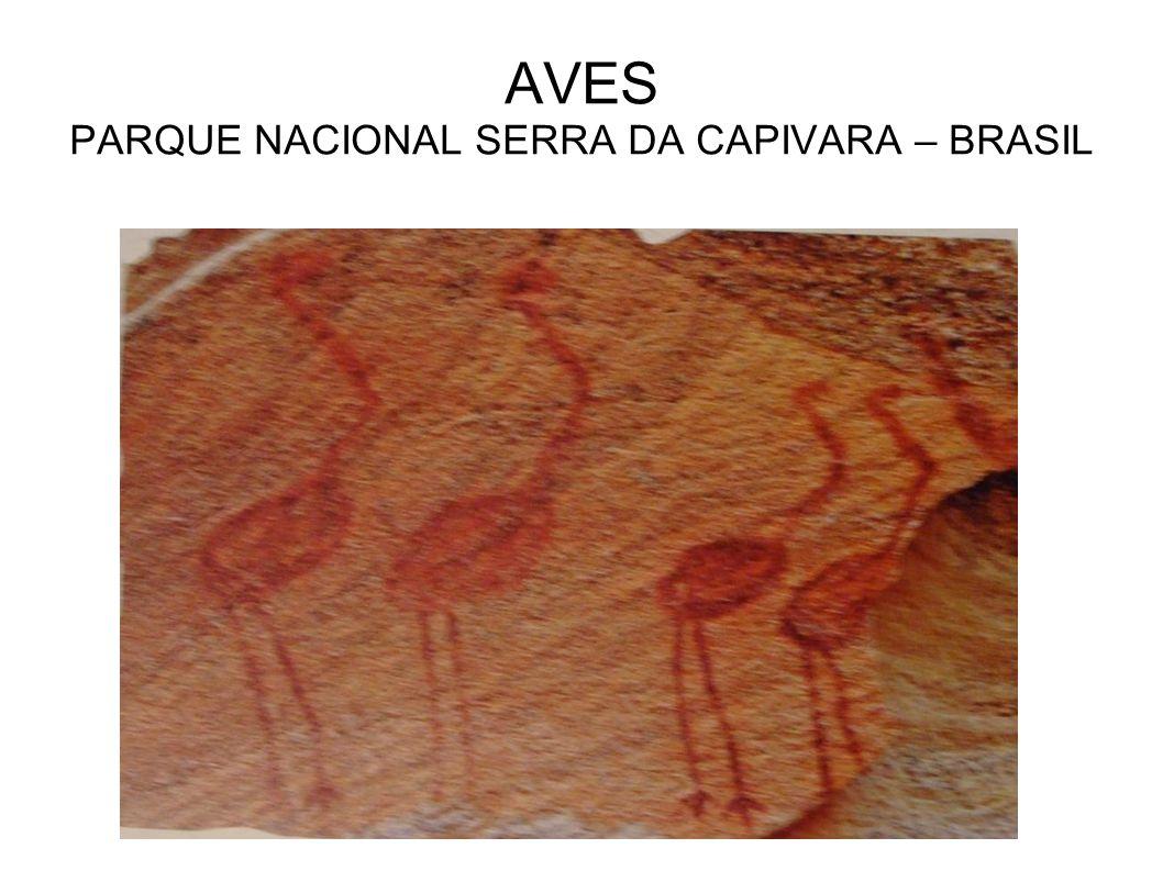 AVES PARQUE NACIONAL SERRA DA CAPIVARA – BRASIL