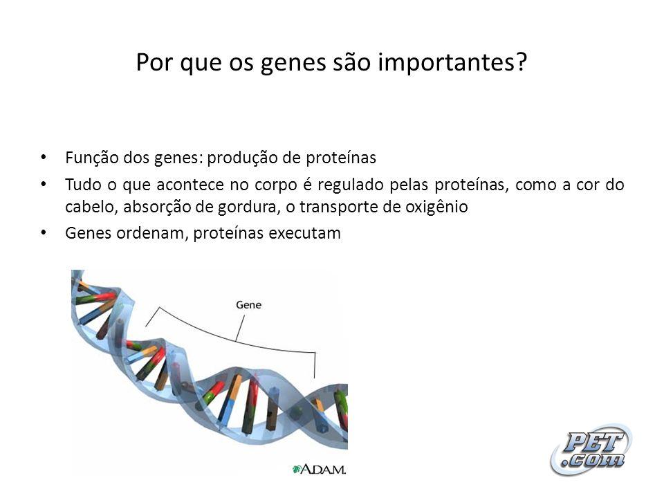 Por que os genes são importantes? Função dos genes: produção de proteínas Tudo o que acontece no corpo é regulado pelas proteínas, como a cor do cabel