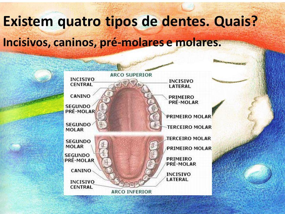 Incisivos, caninos, pré-molares e molares. Existem quatro tipos de dentes. Quais?