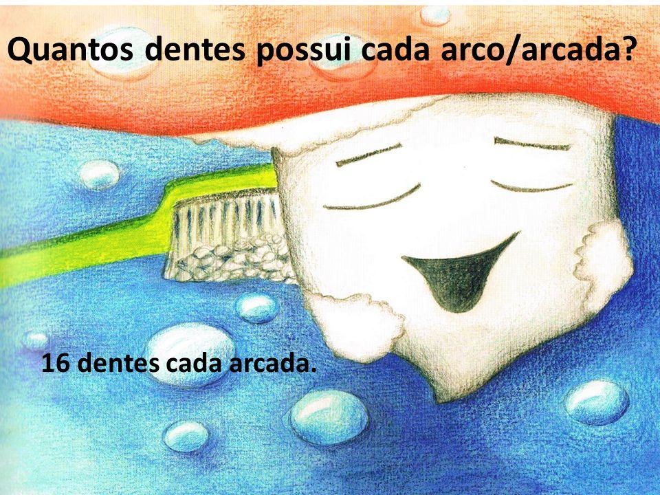 16 dentes cada arcada. Quantos dentes possui cada arco/arcada?
