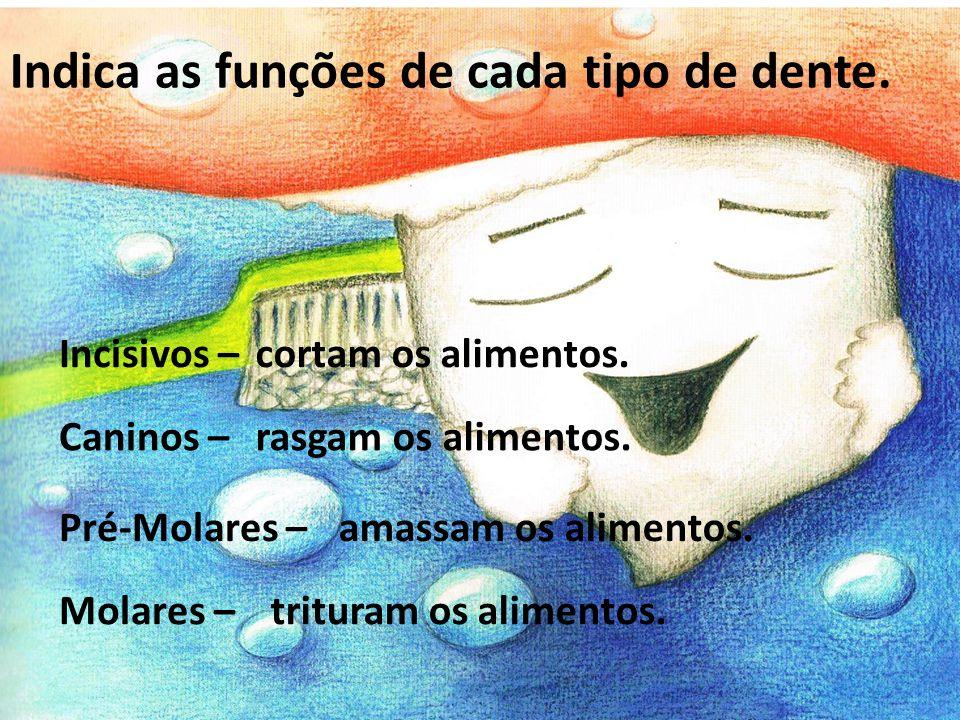 Pré-Molares – Indica as funções de cada tipo de dente. Incisivos – Caninos – Molares – cortam os alimentos. rasgam os alimentos. amassam os alimentos.