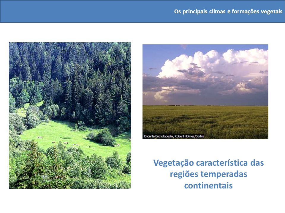 Vegetação característica das regiões temperadas continentais Os principais climas e formações vegetais