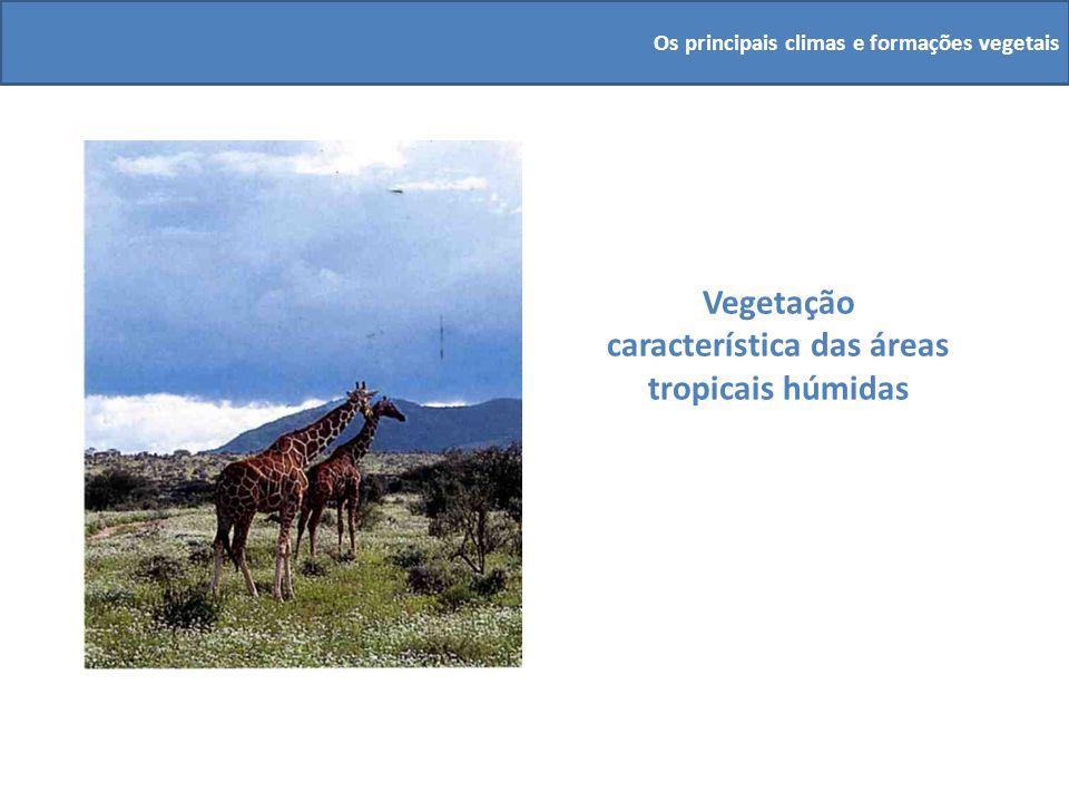Vegetação característica das áreas tropicais húmidas Os principais climas e formações vegetais