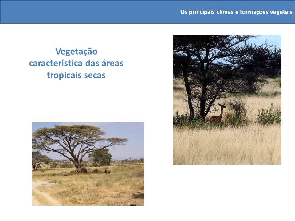 Vegetação característica das áreas tropicais secas Os principais climas e formações vegetais