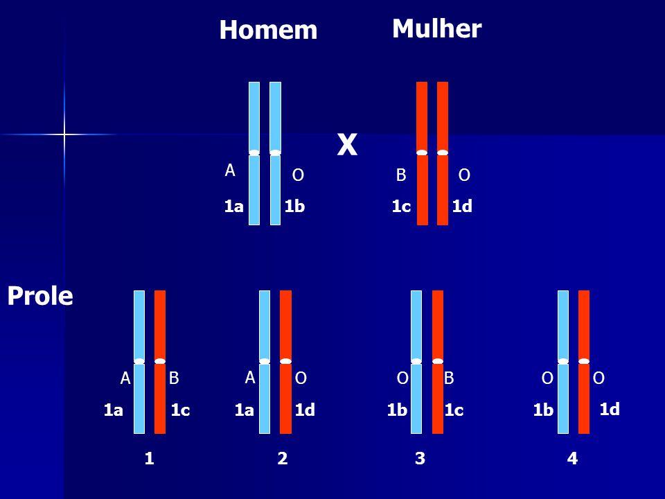 X Homem Mulher Prole 1a1b 1a 1b 12 3 4 1d 1c1d 1c A O O O O B B O A A O B