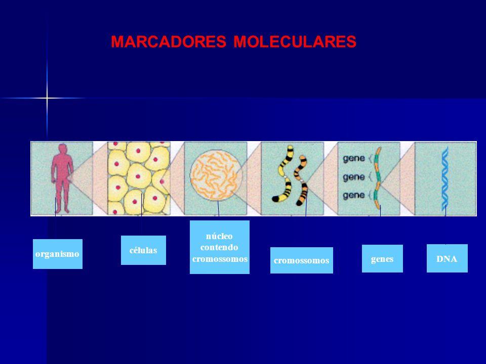 MARCADORES MOLECULARES organismo células cromossomos genes DNA núcleo contendo cromossomos