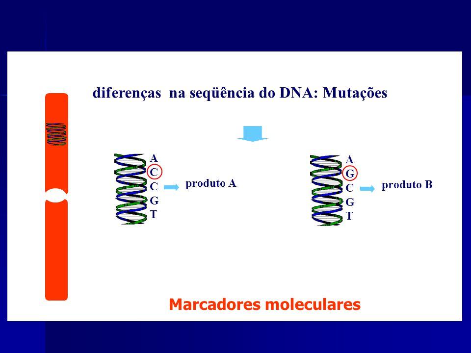 DNA - diferentes formas de uma característica diferenças na seqüência do DNA: Mutações AGCGTAGCGT produto B ALELOS ACCGTACCGT produto A Marcadores moleculares DNA