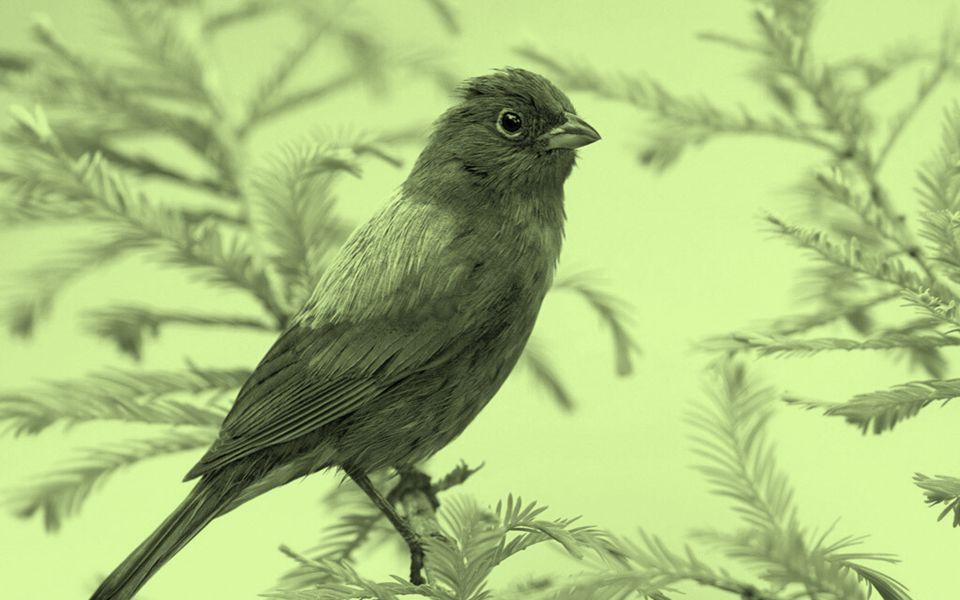 Faça hoje a sua reflexão... Hoje você pode ser como os pássaros... Livre para cantar e para ser feliz.