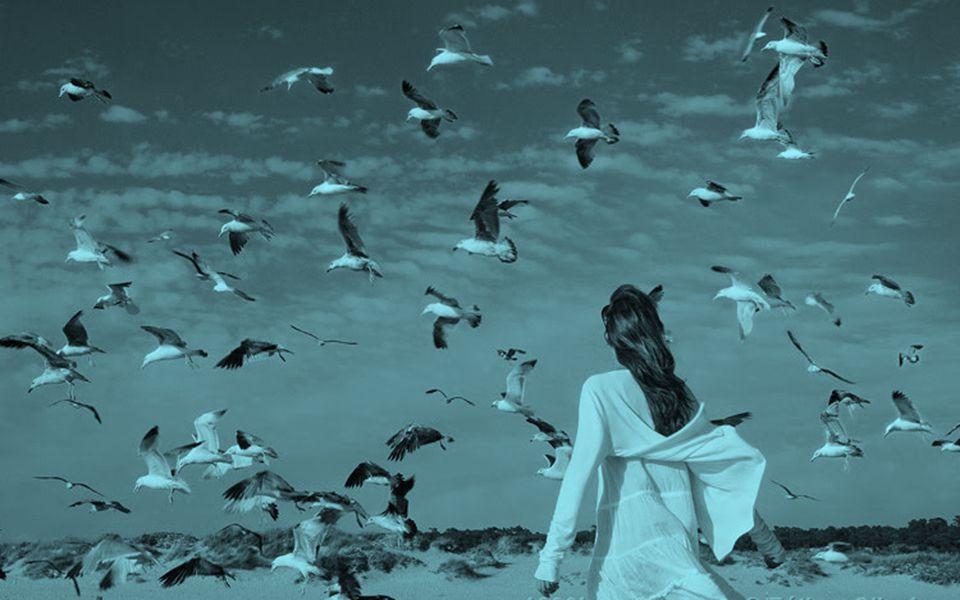 Apenas por hoje, procure perceber o som dos pássaros...