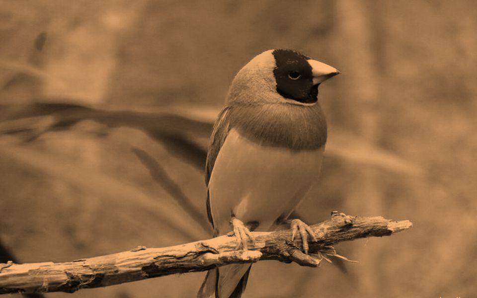 Muitas vezes imperceptíveis aos nossos ouvidos, tão ocupados com os sons do próprio cotidiano, ouvir os pássaros significa purificar a Alma, e crescer